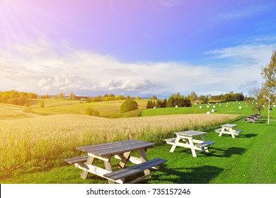 oat field and field of barley and sunny sky, Green farm land with blue sky. Norwaygian farm landscape with green grass, table and chair. the nice autumn in Norway with the beautiful view of the farm.