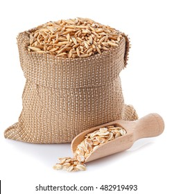 oat grains with husk in burlap bag with wooden scoop full of oatmeal near isolated on white background
