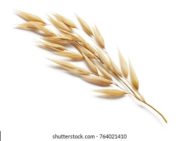 oat plant isolated on white background