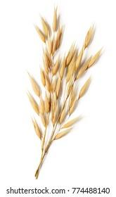 oat plant isolated on white background