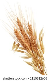 oat plants and wheat ears isolated on white
