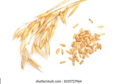 oat spike with grains isolated on white background. Top view. Flat lay