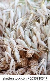 Oat wheat ears stalks bouquet macro view photo. Shallow depth of field, selective focus.