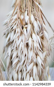 Oat wheat ears stalks bouquet macro view photo. Shallow depth of field, selective focus