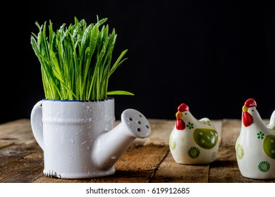 Oatmeal sprouts in a pot of watering can on an old wooden table