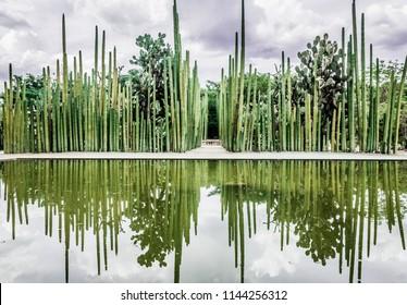Oaxaca, Oaxaca / Mexico - 21/7/2018: Detail of the botanical garden in Oaxaca Mexico
