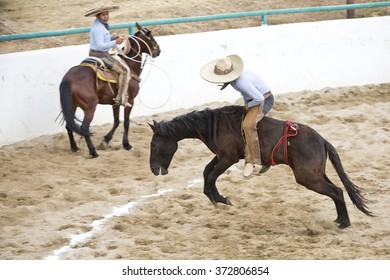 """OAXACA, MEXICO. DECEMBER 20, 2015. A man is riding a wild horse, this is called """"jineteo de yegua"""". As part of Charreria Mexican National Sport"""