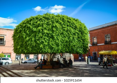 OAXACA, MEXICO - NOVEMBER 2013: People resting in a shadow of big tree
