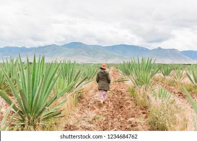Oaxaca / Mexico - September 20th, 2018: Girl dancing in agave field in Oaxaca near Santiago Matalan