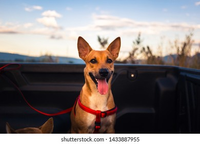 Obedient Thai pet dog is sitting in the pickup truck and wait for owner taking to travel around the nature