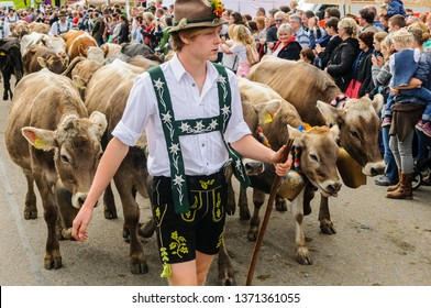 OBERMAISELSTEIN, BAVARIA / GERMANY - SEPTEMBER 23 2017: young man wearing lederhosen with adorned cattle at the traditional annual Almabtrieb / Viehscheid in Allgaeu
