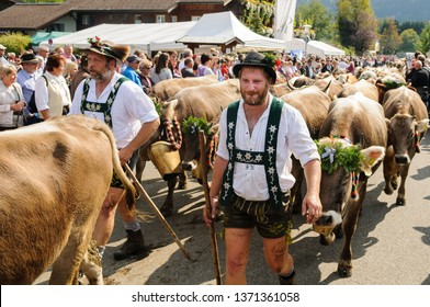 OBERMAISELSTEIN, BAVARIA / GERMANY - SEPTEMBER 23 2017: men wearing lederhosen with adorned cattle at the traditional annual Almabtrieb / Viehscheid in Allgaeu
