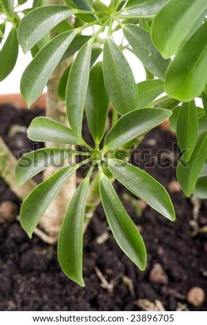 Object On White Flower Indoor Plants Stock Photo Edit Now 23896705