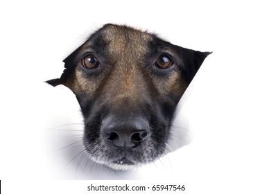 object on white - muzzle dog close up