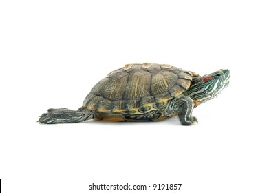 Object turtle on white background