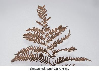 Objects - Dry fern