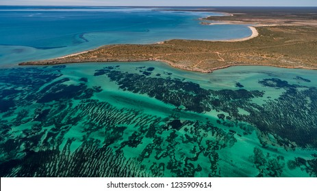 Oblique aerial drone view of seagrass meadows and headlands in the World Heritage Listed Shark Bay Conservation Area.
