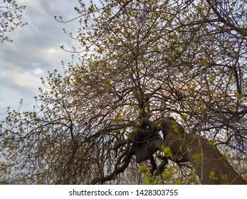 oblique tree trunk in the public park