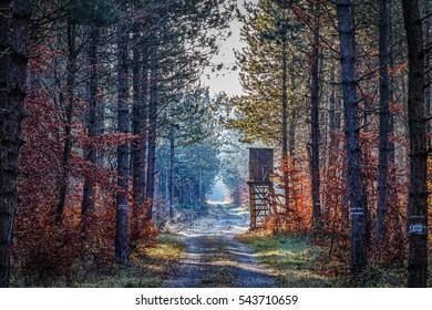 observation seat forest