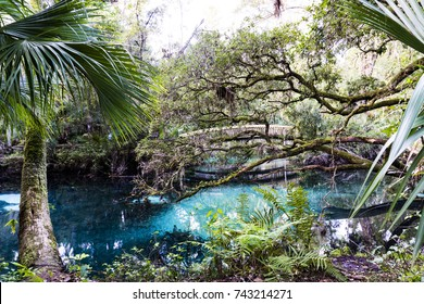 Ocala National Forest in Florida, USA