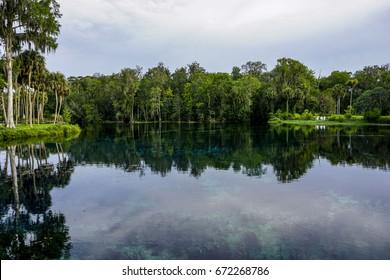 Ocala National Forest in Ocala, Florida,USA.