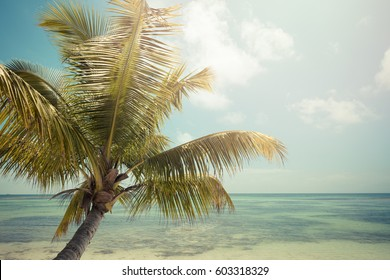 ocean beach, palm trees, retro