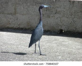 Ocean bird blue