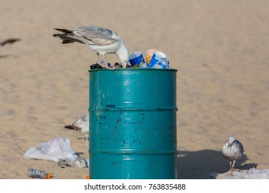 Ocean City, MD / USA - June 18, 2017: Seagull picks litter from garbage can on the beach in Ocean City, MD on June 18, 2017. Ocean City, MD is a popular beach resorts on East Coast.