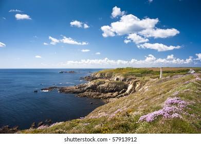 ocean coast with flowers