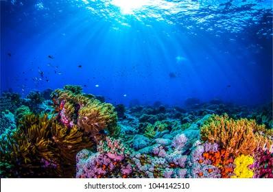 Ocean coral reef underwater. Sea world under water background