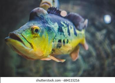 Ocean fish.