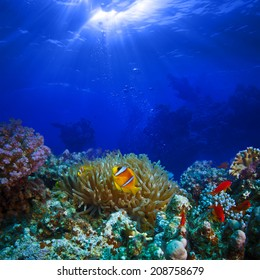 Ocean full of life. underwater coral reef in open deep sea