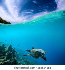 Ocean Life. Marine Animals. Seascape Maldivian Postcard. Underwater discovered.A Turtle floating under coral reef
