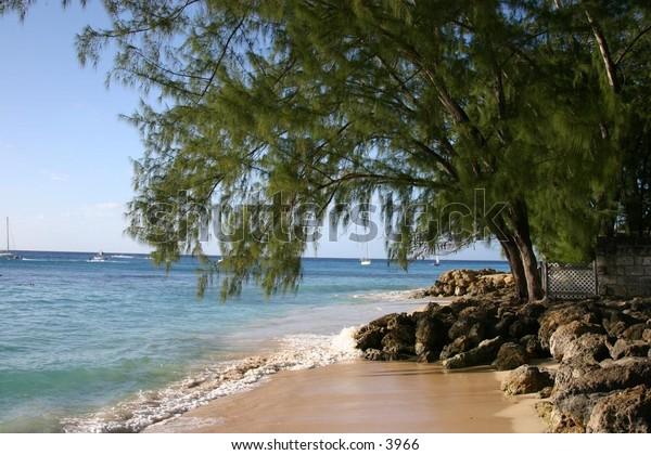 ocean meets land - overhanging tree