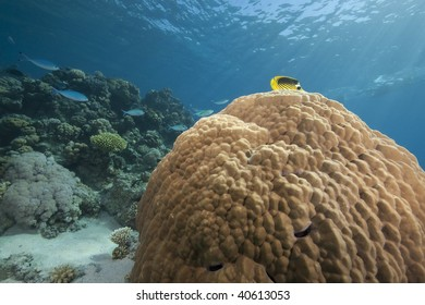 ocean and mountain coral