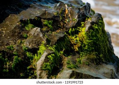 ocean rock textures negative space holes algae