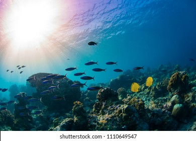 Ocean sea life, Underwater coral reef environment with water surface and the sun, colorful fish shoal on tropical background