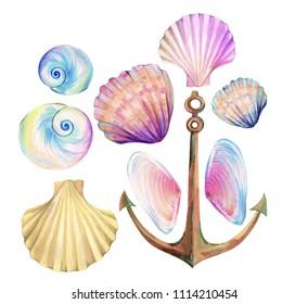 Ocean set. sea shells,  cockles and a rusty anchor.