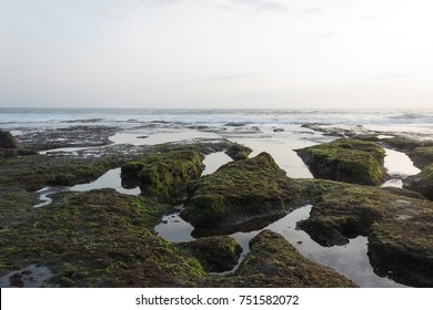 Ocean shore Tanah Lot, low tide, stones covered with seaweed