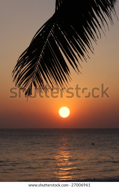 ocean sunset and palm leaf