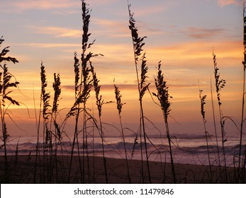 Ocean surf with sea grass silhouetted