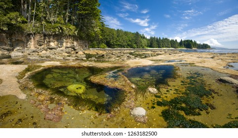 Ocean Tidepool Ecosystems, on Botanical Beach, British Columbia