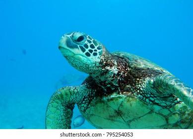Ocean Turtle Closeup