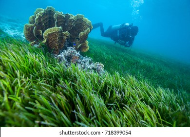 the ocean underwater tropical reef with  through water surface. th diver explore seagrass field with copyspace for text layouts,Layang Layang