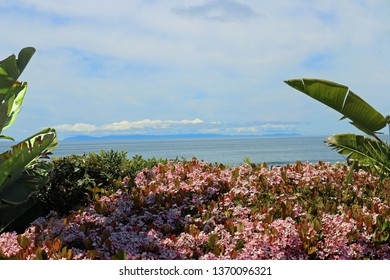 Ocean view behind pink garden flowers