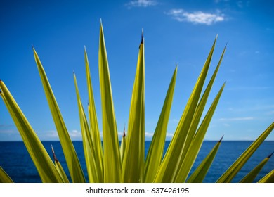 Ocean view with palm