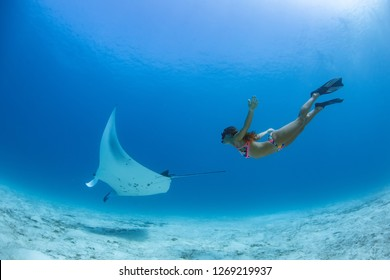 Ocean Water background Underwater Manta and Girl diving