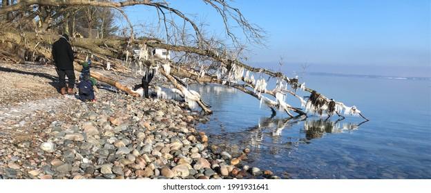 Ocean water frosen on trees