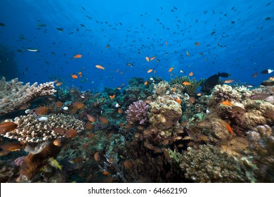 Ocean,fish and coral taken in the Red Sea.