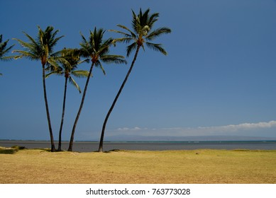 Oceanfront park and beach with palm trees